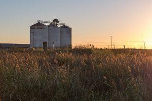 【無断転載禁止】鶏鳴新聞2020年10月25日号 2020/21穀物年度 生産量、在庫など下方修正