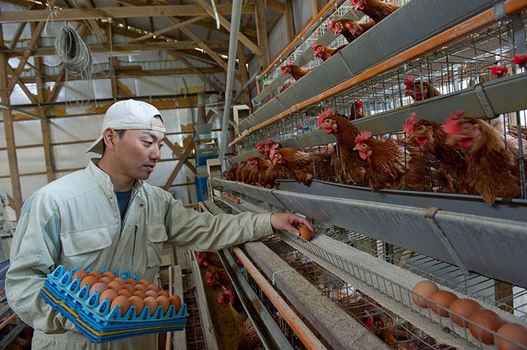 【無断転載禁止】鶏鳴新聞2021年9月25日号  国内侵入リスク高い 今秋の鳥インフルエンザシーズン
