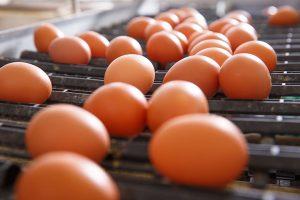【無断転載禁止】鶏鳴新聞2021年6月15日号  4月輸入7.4%増、調製品3.2%増、輸入卵の殻付換算7.8%増