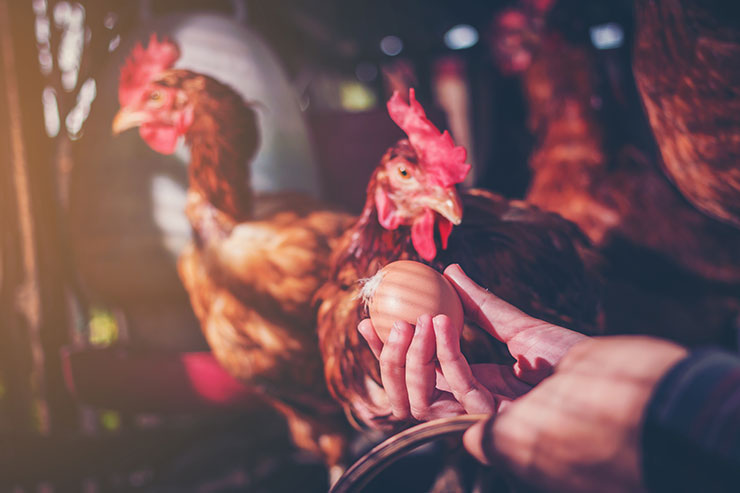 【無断転載禁止】鶏鳴新聞2021年7月5日号  鶏ふんを20%減らす配合飼料 全農と北日本くみあい飼料が特許取得