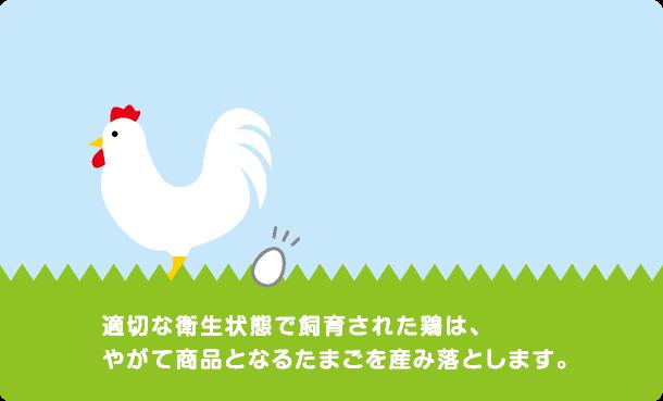 適切な衛生状態で飼育された鶏は、やがて商品となるたまごを産み落とします。