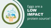【無断転載禁止】鶏鳴新聞2020年10月5日号 IECが卵の持続可能性でニュースリリース